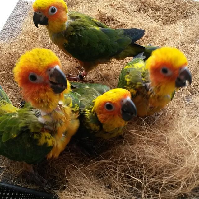 Meet Coco Martin's Doggies, Birdies and more!