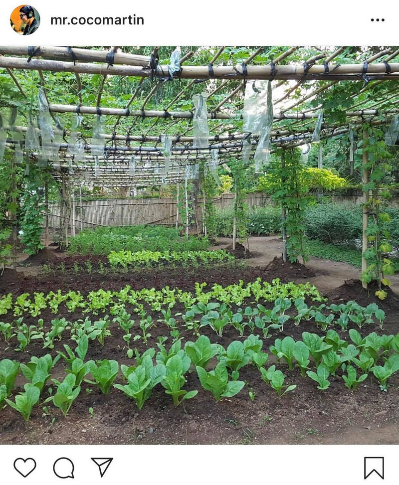 It's that time of year! Take a tour of Coco Martin's mini-farm!